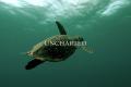 Recensione Outlander Episodio 311: Uncharted