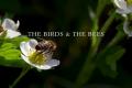 Recensione Outlander Episodio 409: The Birds & The Bees